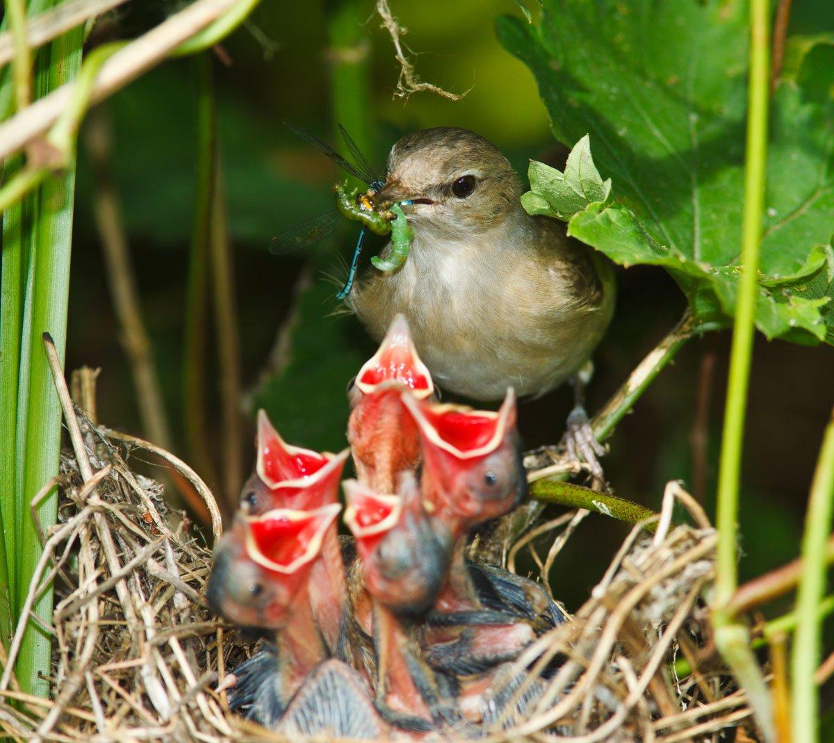 Klimatické změny v zahradě: pták krmí své potomky
