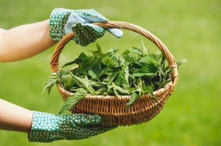 Zužitkujte plevel v zahradě. Vyrobte si domácí hnojivo