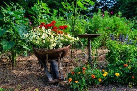 Tajemství zdravých a prosperujících rostlin? Vyberte jim správné stanoviště