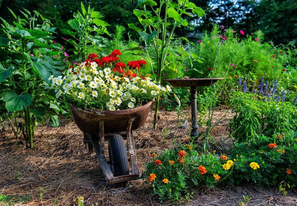 Jak vybrat vhodné stanoviště pro rostliny