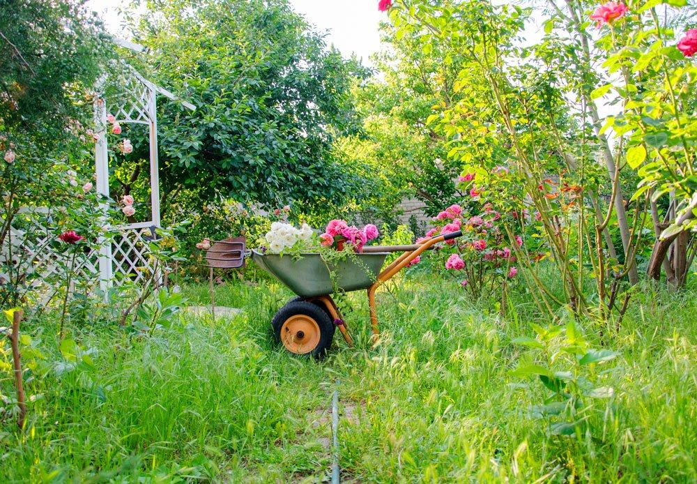 Červenec v zahradě podle lunárního kalendáře
