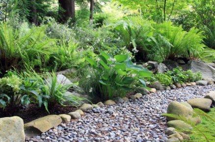 Zahrada s atmosférou lesa. Jak pěstovat kapraďorosty