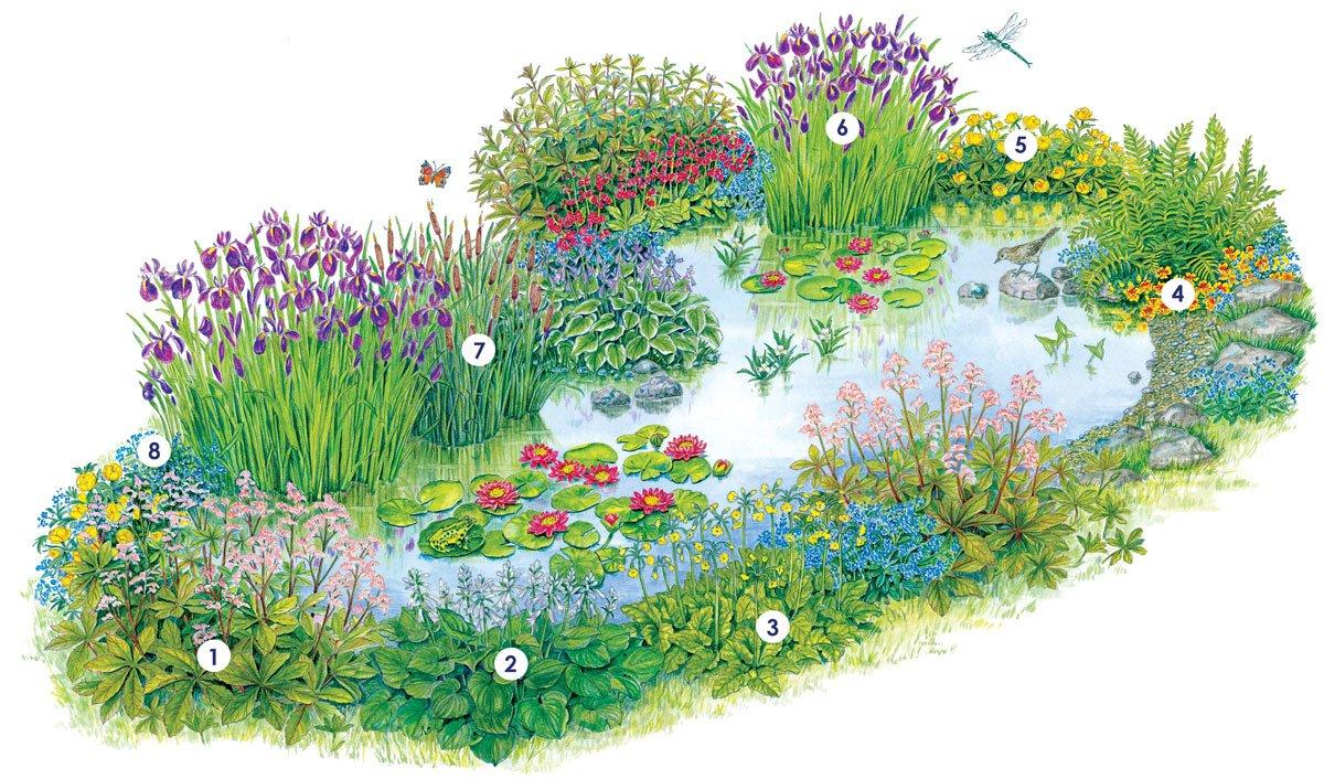 Seznam rostlin pro výsadbu kolem břehů jezírka