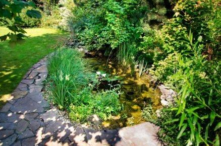 Zahradní jezírko s vodními rostlinami a chodníčkem z přírodního kamene.