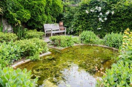 6 řešení pro zahradu a terasu: Rostliny vhodné ke břehům jezírka