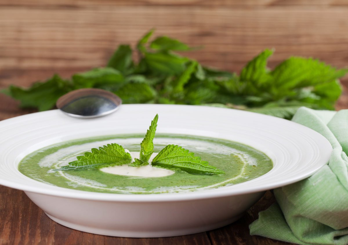 kopřivová polévka