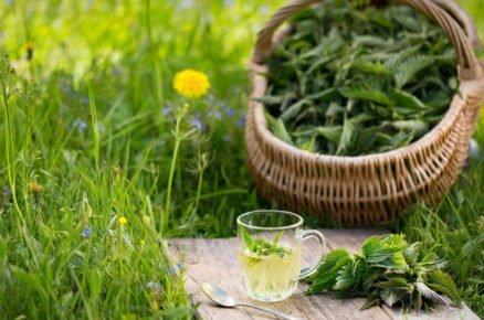 Kopřiva není jenom plevel. Poznáme 10 způsobů jak ji využít doma i v zahradě