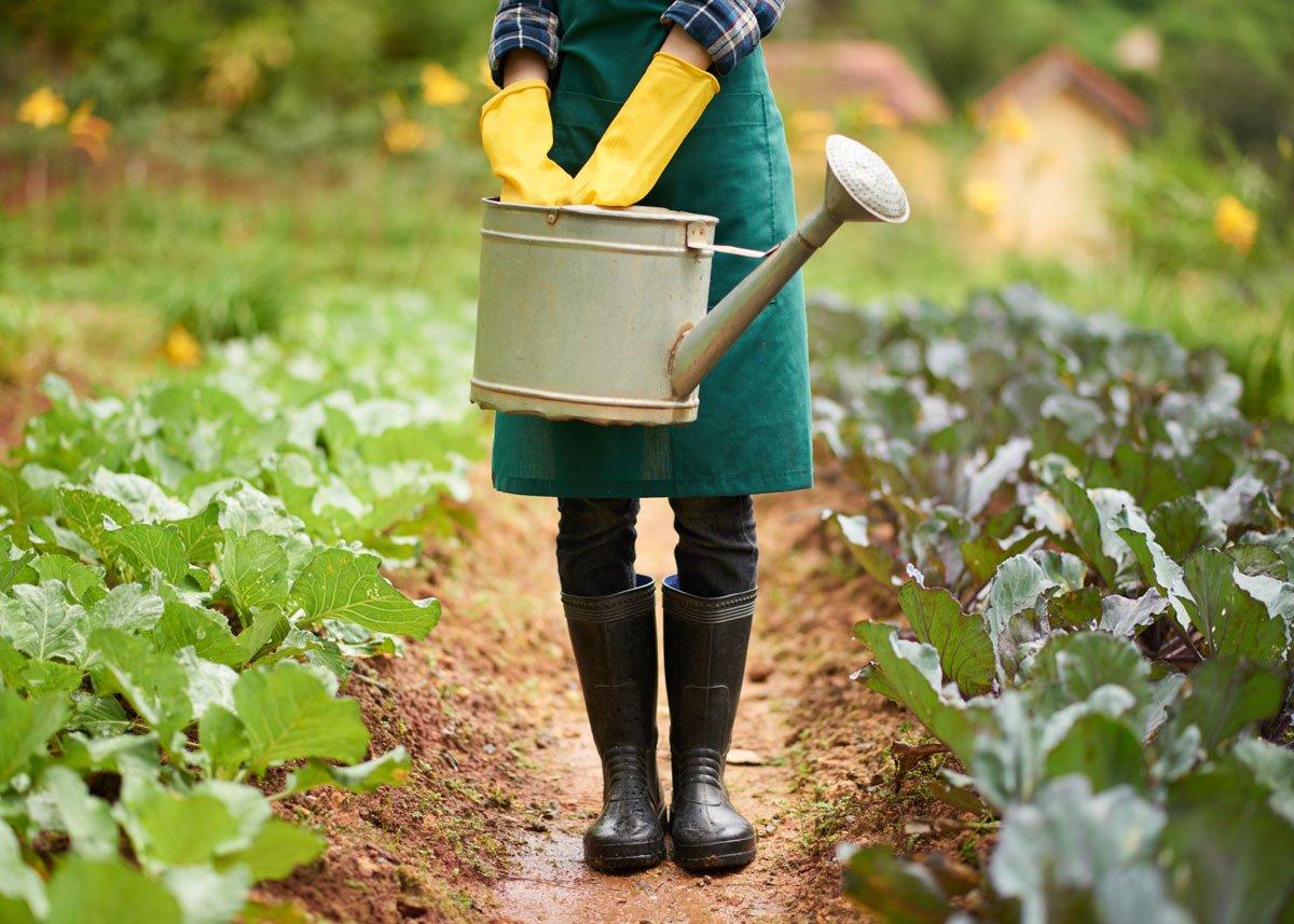 zalévání úrody na zahradě