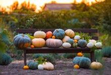 8 otázek ke konzumaci a pěstování dýní: různé druhy dýní na lavičce