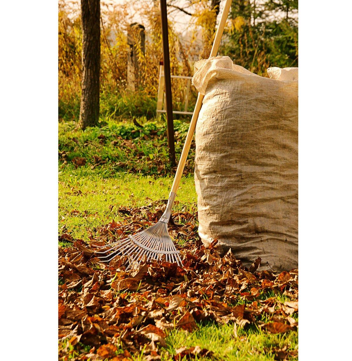 Jak se postarat o ovocné dřeviny před zimou: Úklid lístí