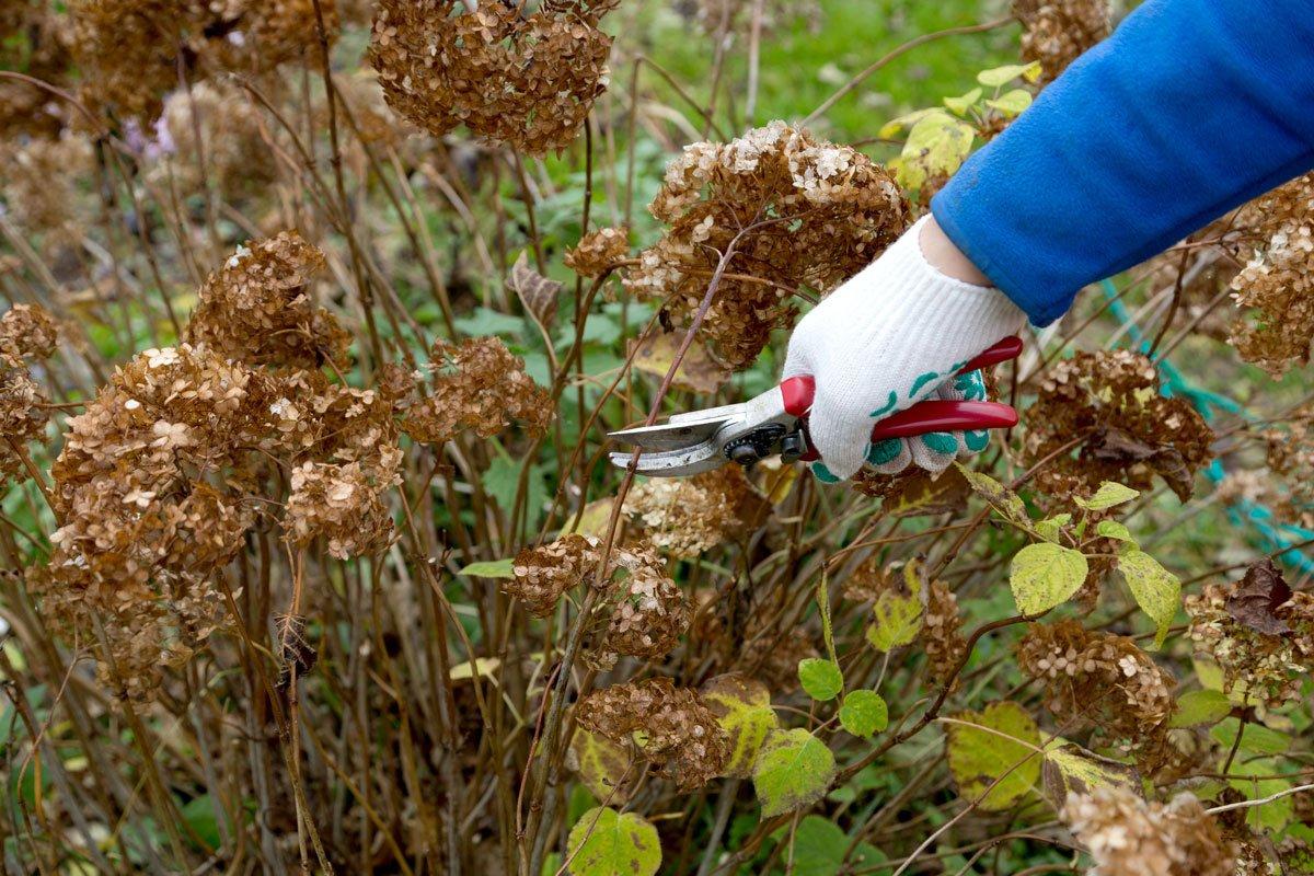 10 nejdůležitějších kroků pro zazimování zahrady: omlazení trvalek