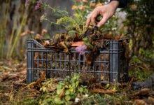 Jak na zazimování trvalek ve vegetačních nádobách