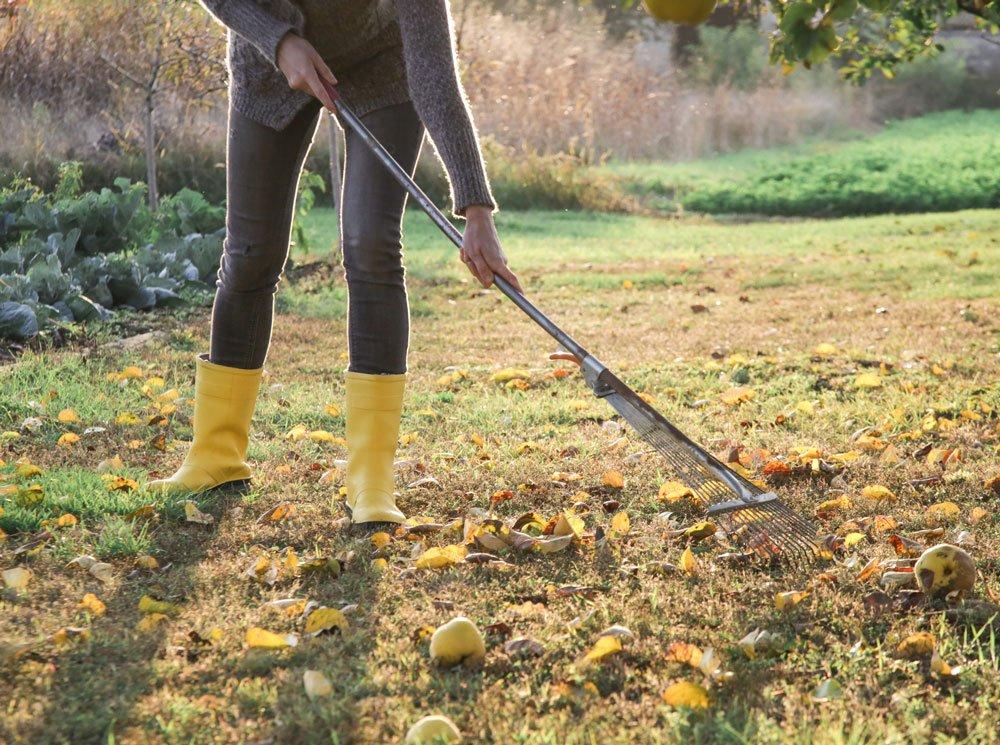 10 nejdůležitějších kroků pro zazimování zahrady: odstranění listů z trávníku