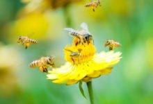 Rostliny v zahradě prospěšné pro včely