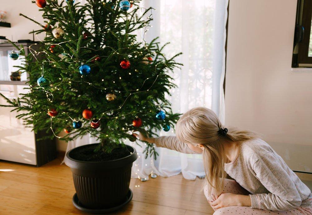 Jak na výběr a péči o vánoční stromek v květináči