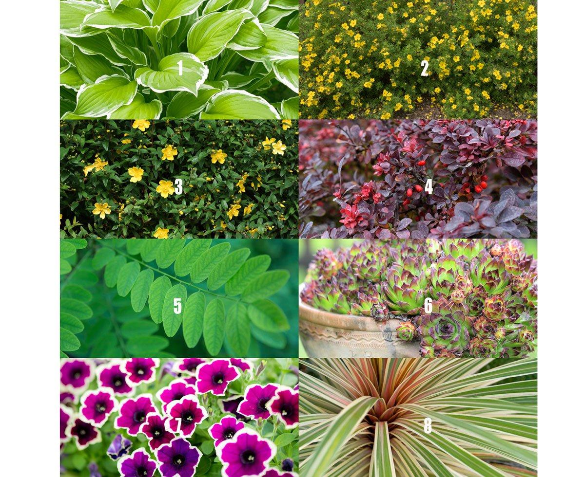 Okrasné rostliny vhodné do zahrady se psem