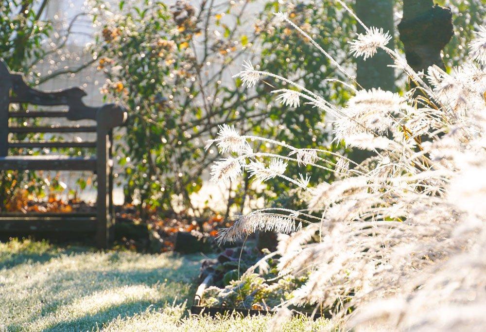 Které rostliny budou atraktivní v zahradě i v zimě
