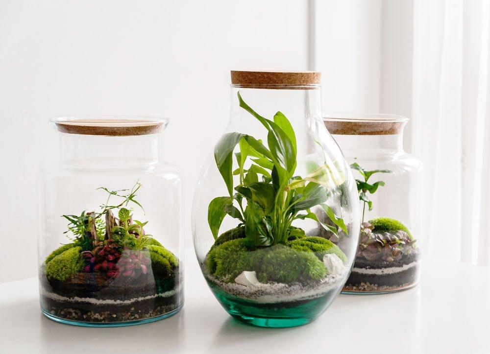 Jak vytvořit tropickou minizahrádku ve skleněné nádobě