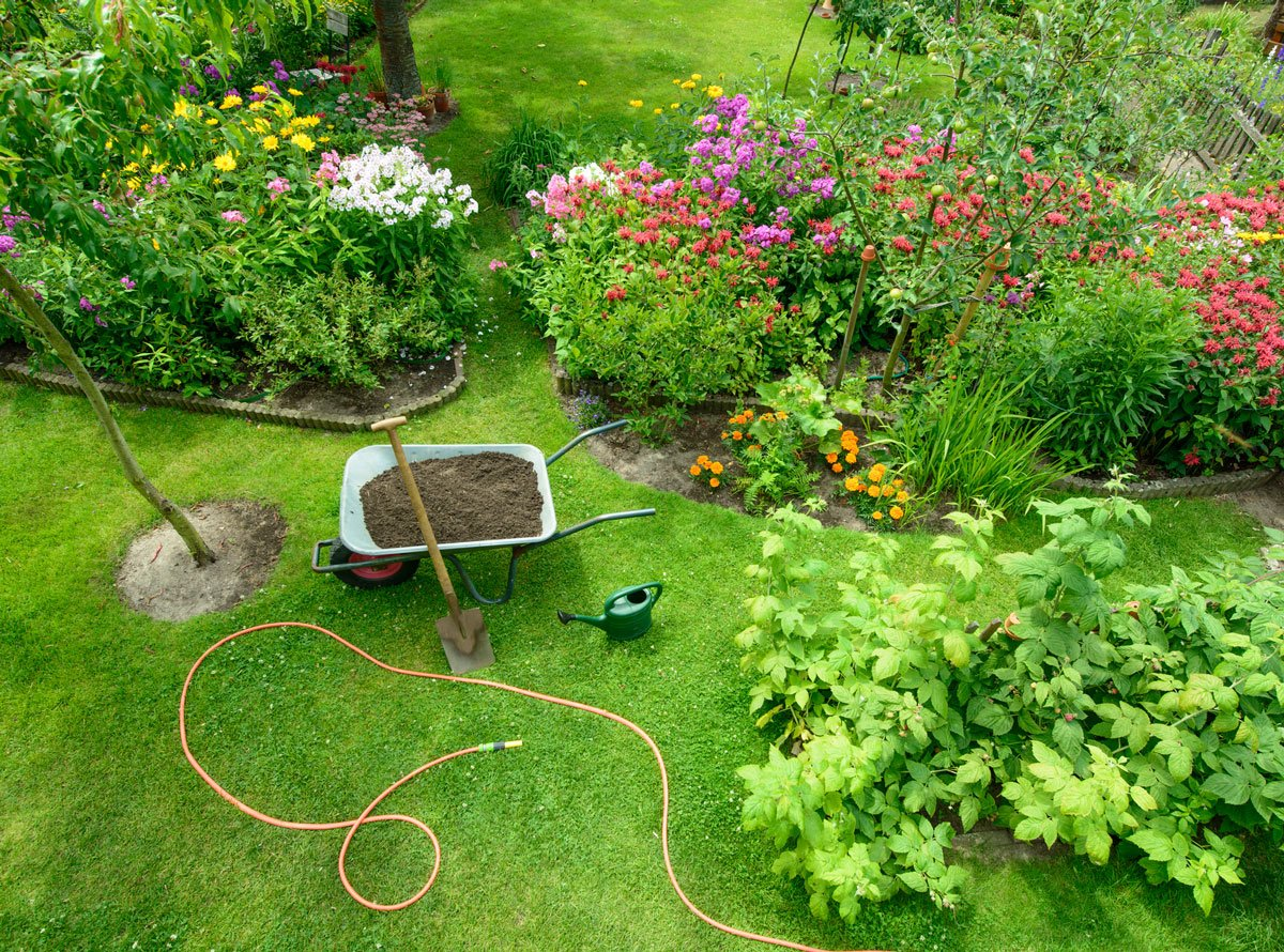 Osvědčené trvalky a trávy, které si vypěstujete ze semen