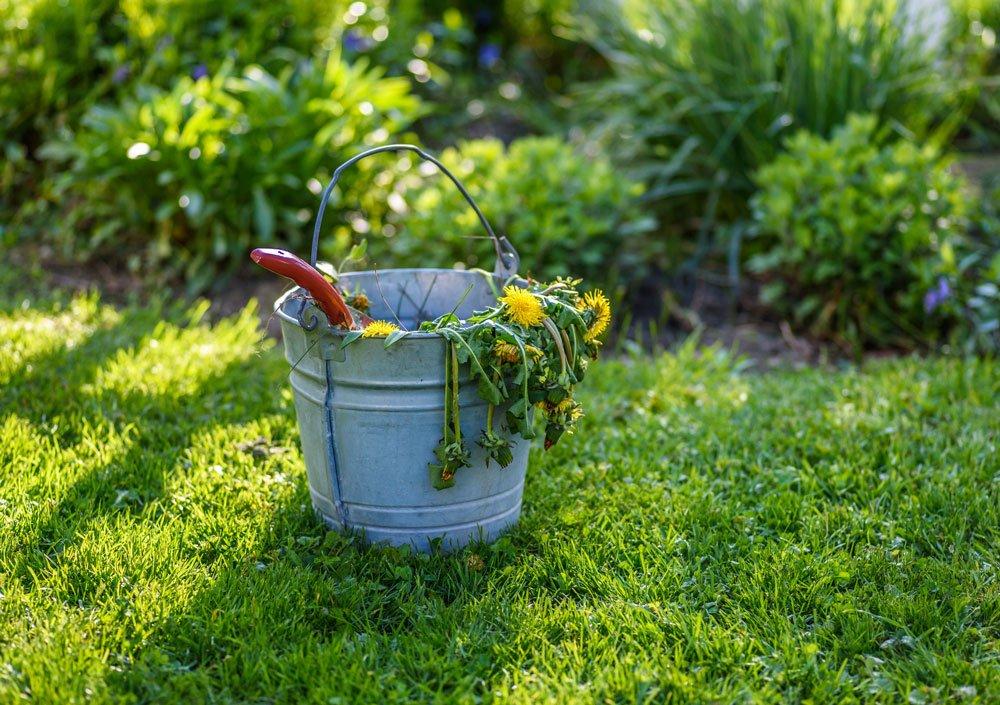 péče o trávník na jaře