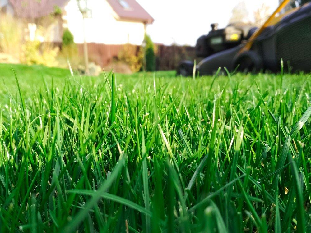 choroby a škůdci trávníku