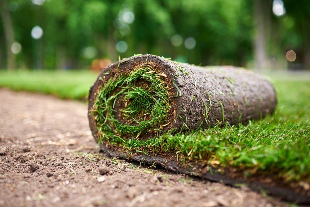 jak pečovat o trávník: kobercový trávník