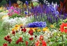 Letničky, trvalky a okrasné trávy, které se dají vypěstovat ze semen: zahrada s různymi druhy letniček a trvalek