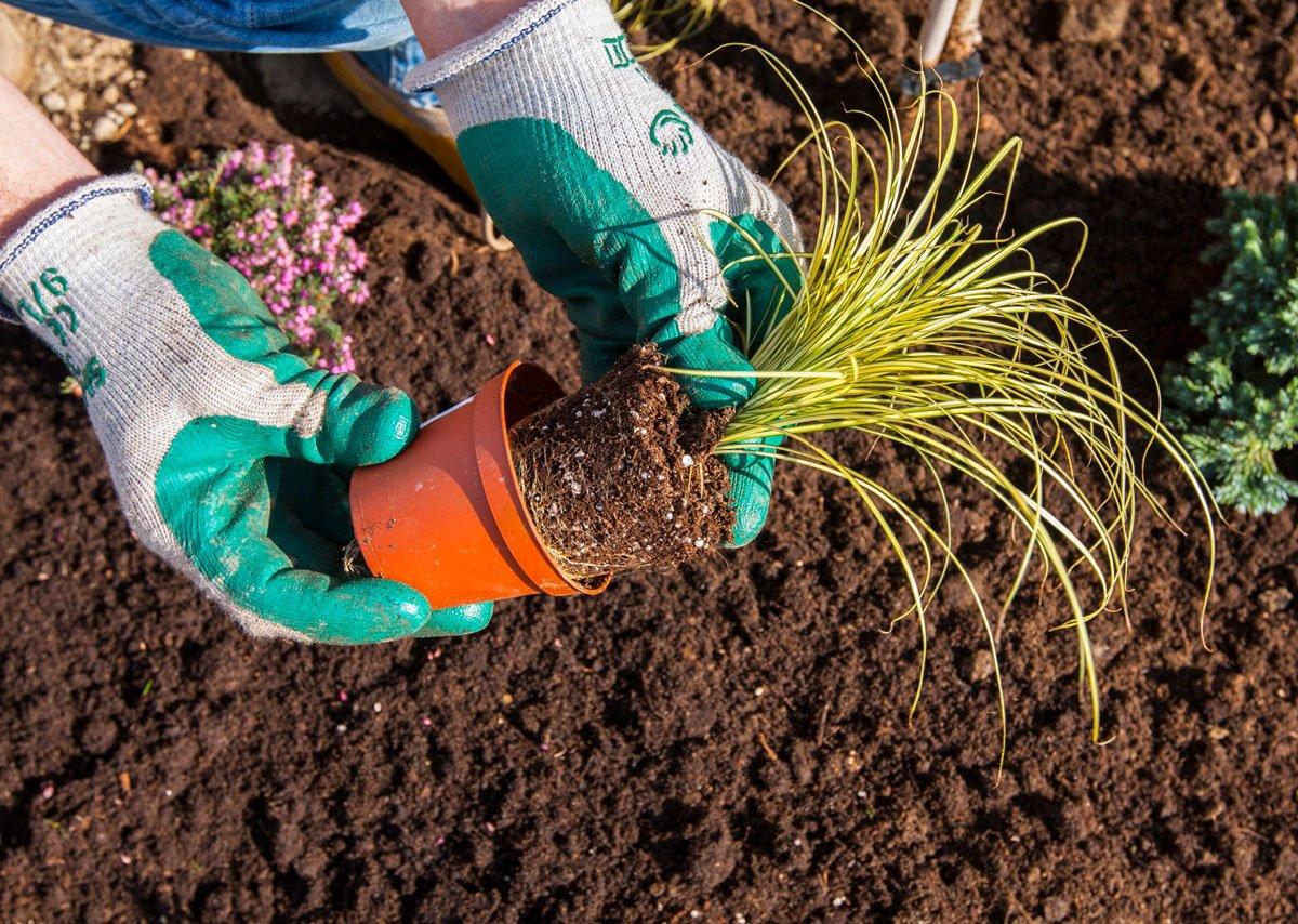 Jarní výsadba okrasných trav