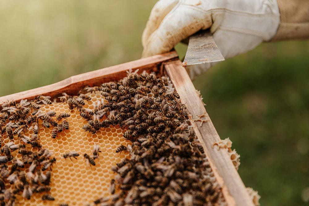produkty včel