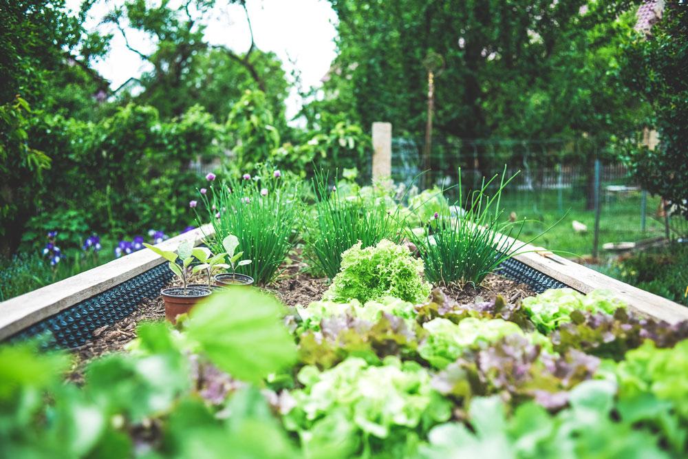 pěstování zeleniny bez chemie