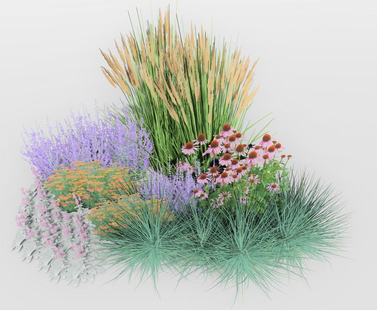 Návrh kombinace rostlin na prudké slunce: třtina, třapatkovka, perovskie, řebříček, čistec, kostřava