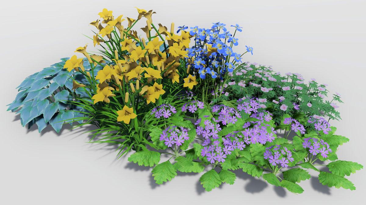 Návrh kombinace rostlin k vodě: kosatec, denivka, kakost, prvosenka, hosta