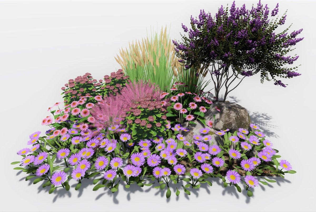 Návrh kombinace rostlin pro podzimní záhon s myrtou: myrta, rozchodník, třapatkovka, muhla, třtina, hvězdice