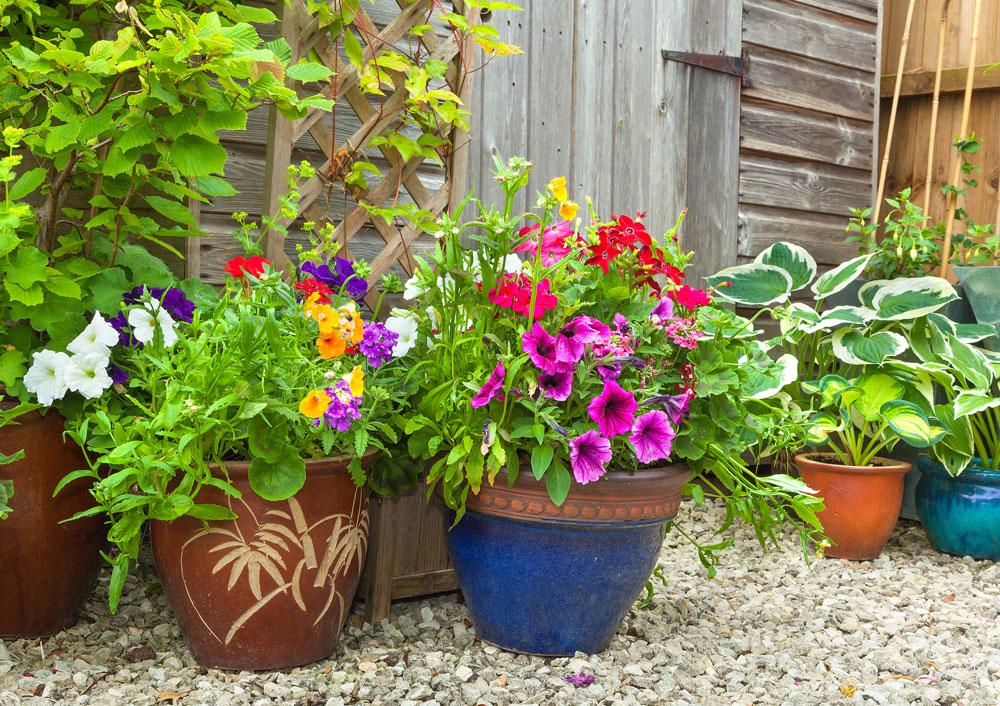 Smíšené letničkové výsadby v kvetináčech