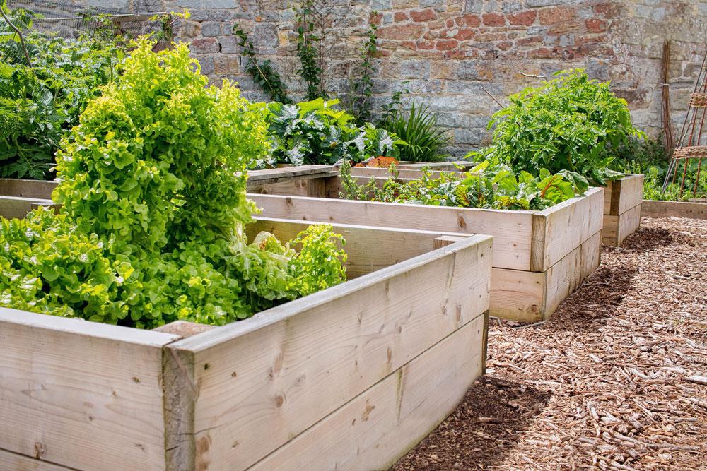 pěstování ve vyvýšených záhonech