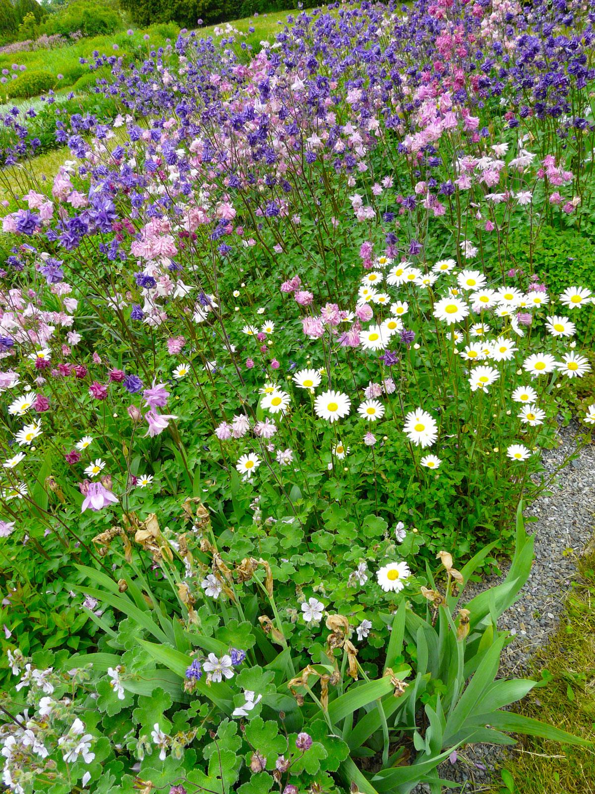 květinový trvalkový záhon