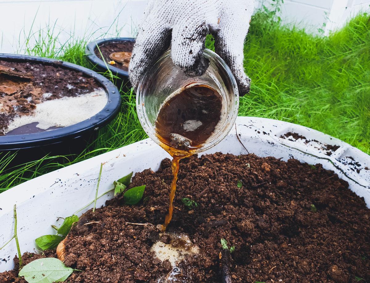 lití výluhu z kompostu do půdy