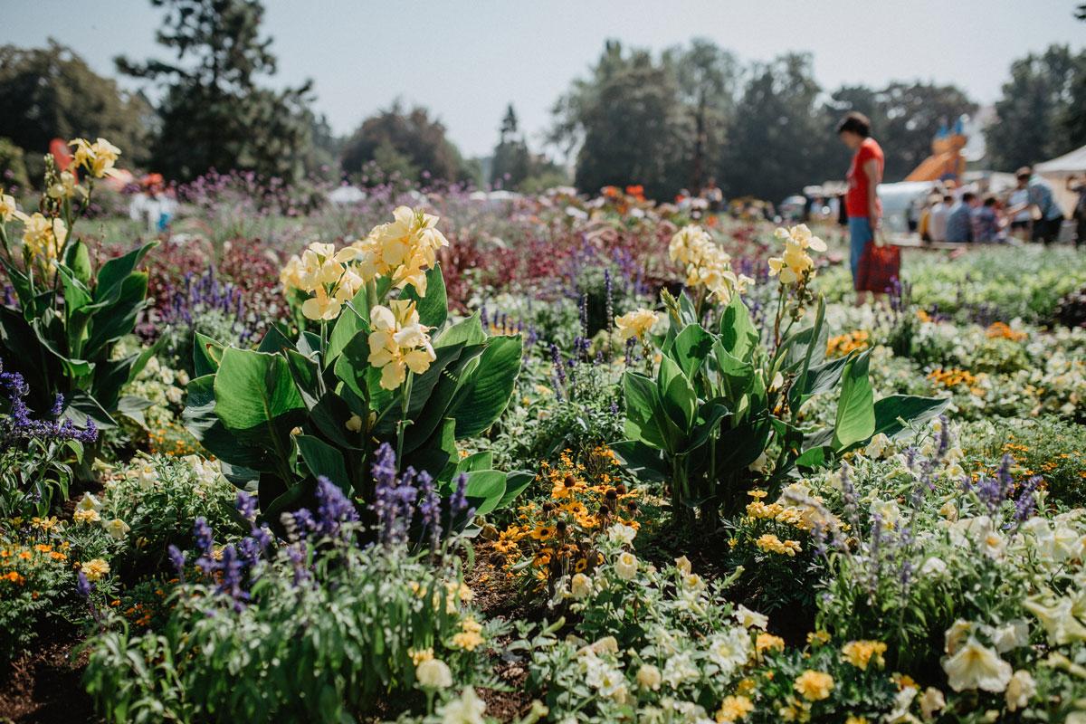 květiny na Letní Floře Olomouc