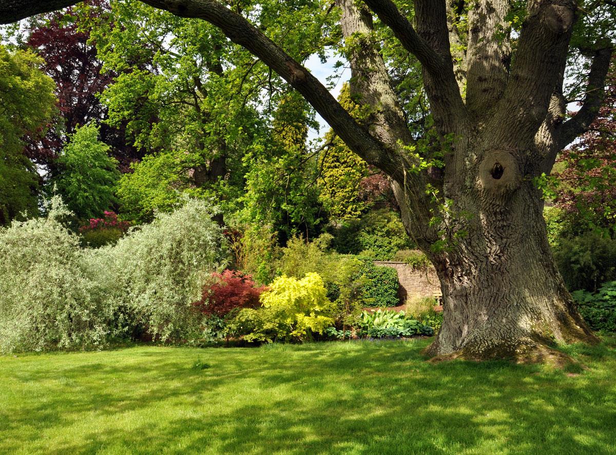 zahrada s okrasnými záhony a stromem