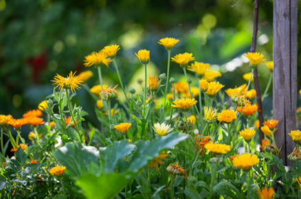 Okrasný záhon se žlutými květy
