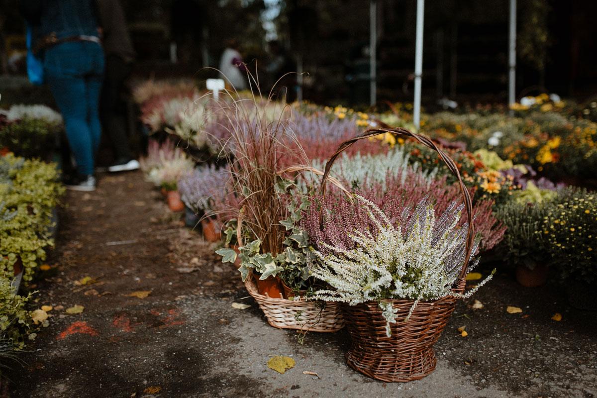 Podzimní Flora Olomouc 2021 vřesy