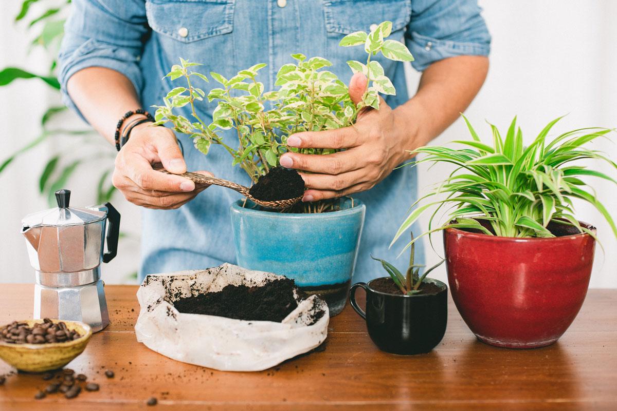 muž přidává kávový lógr do pokojové rostliny