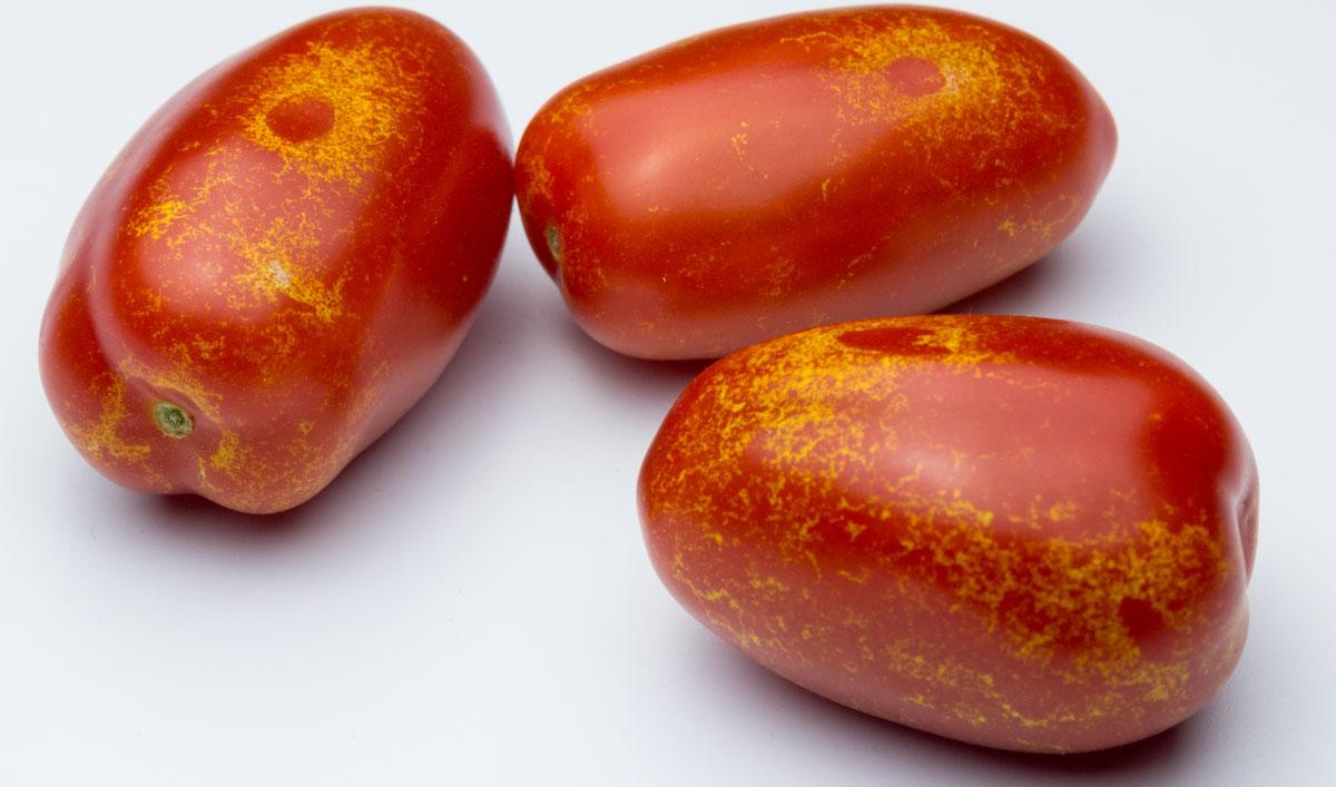 rajčata napadeny třásněnkami