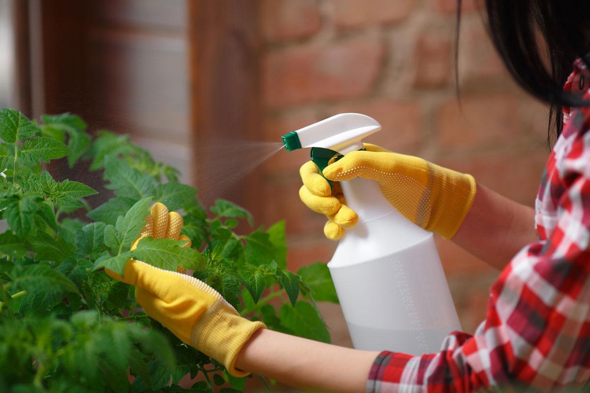 žena stříká rostlinu