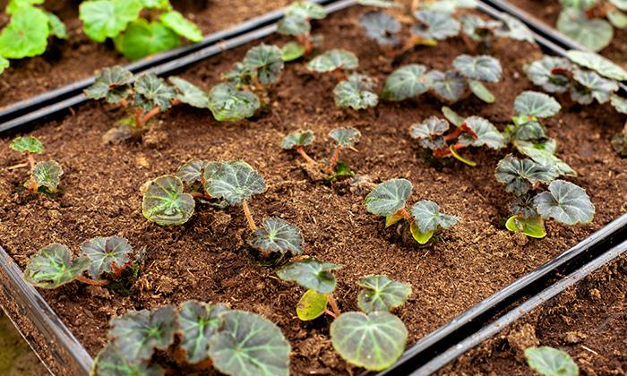 4c98f74a05d Okrasná zahrada  Co je potřeba udělat v lednu